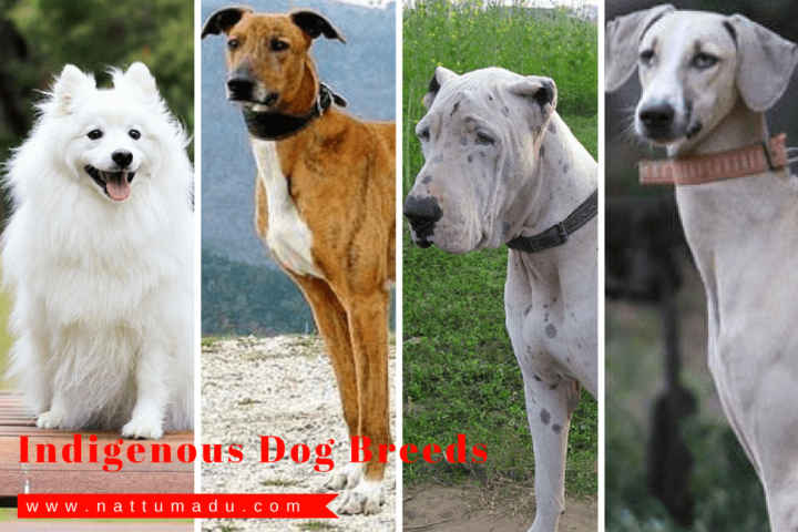 indian native dog breeds