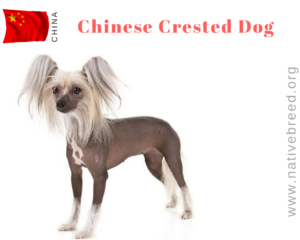 China :Native Dog Breeds - NATIVE BREED ORG