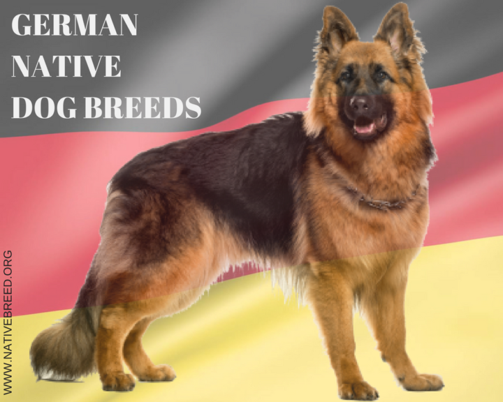 Germany native dog breed