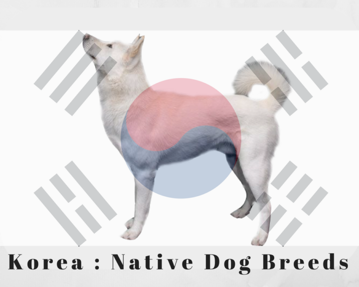 Korea Native Dog Breeds