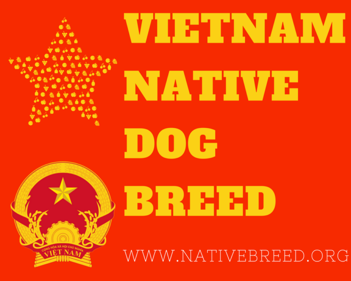 Vietnam native dog breeds