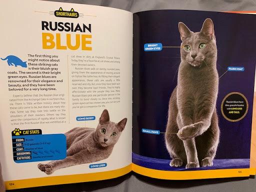 Cat Breeds Originating In Russia Native Breed Org