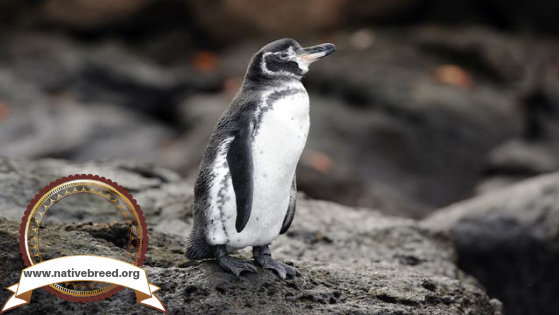 Native Animals You Can Only Find In The Ecuador Galapagos