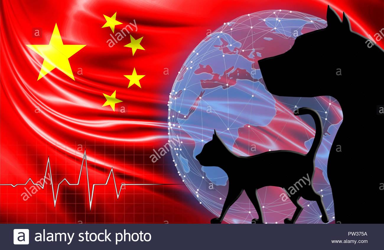 Cat Breeds Originating In China Native Breed Org