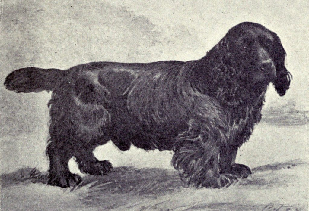 Sussex Spaniel | Native Breed.org